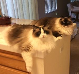 Dewey and Max
