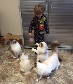 Jayden and kittens