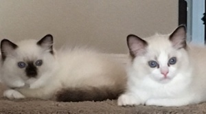 Tacori's two little sweethearts!